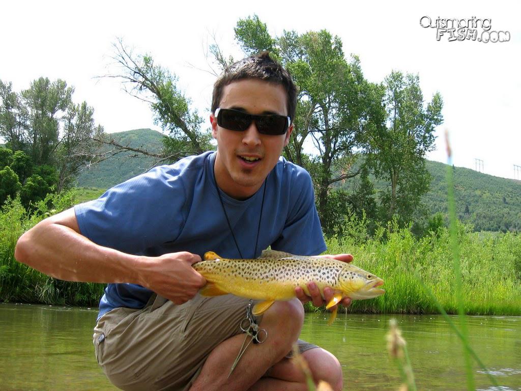 summertime-brown-trout-undercut-bank