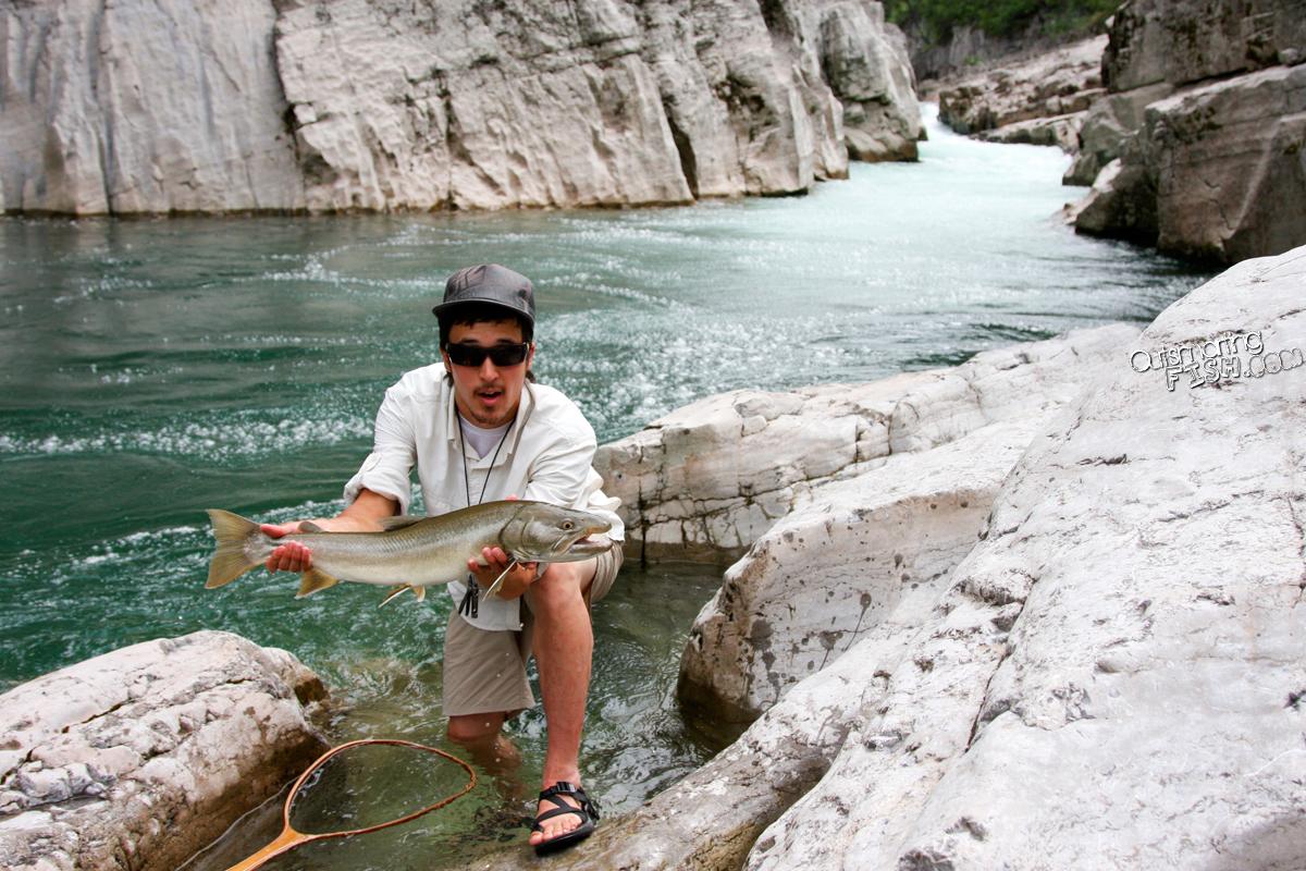 standard bull trout