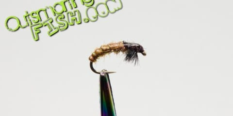 payczech-nymph-caddis-larvae