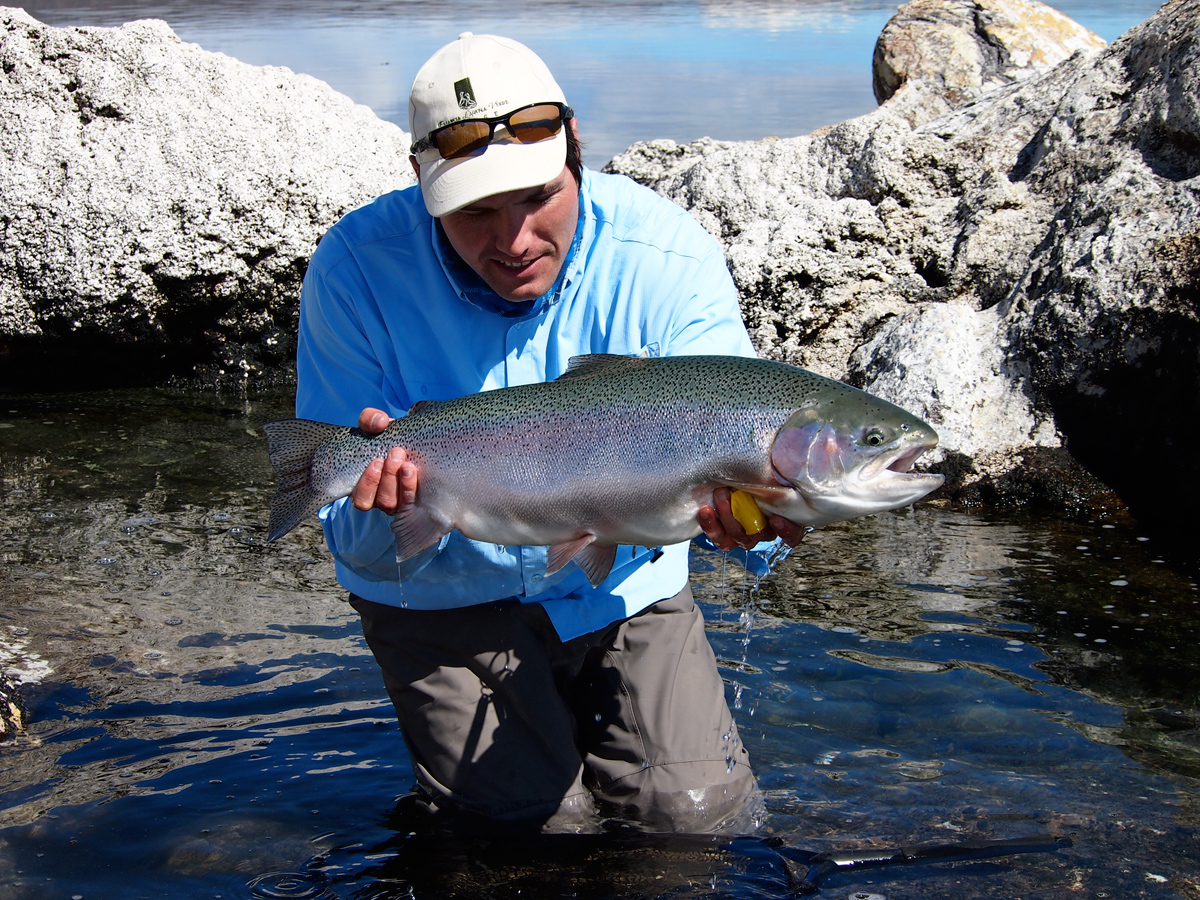 fat-argentina-rainbow