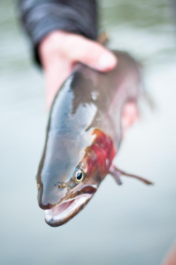 utah-cutthroat-river