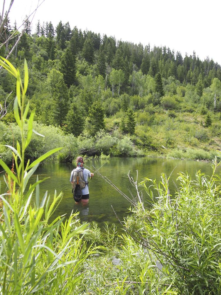 small-stream-beaver-pond