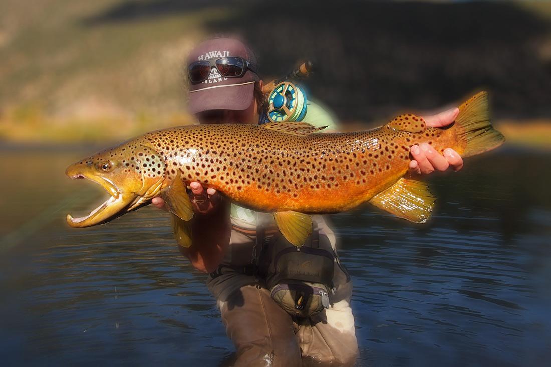 trophy-brown-trout