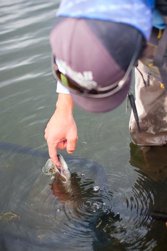 feeding-the-fish