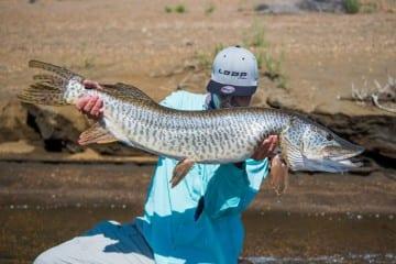 tiger-muskie-utah-fishing