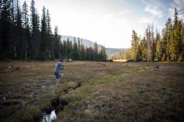 Utah-skinny-water-brook-trout