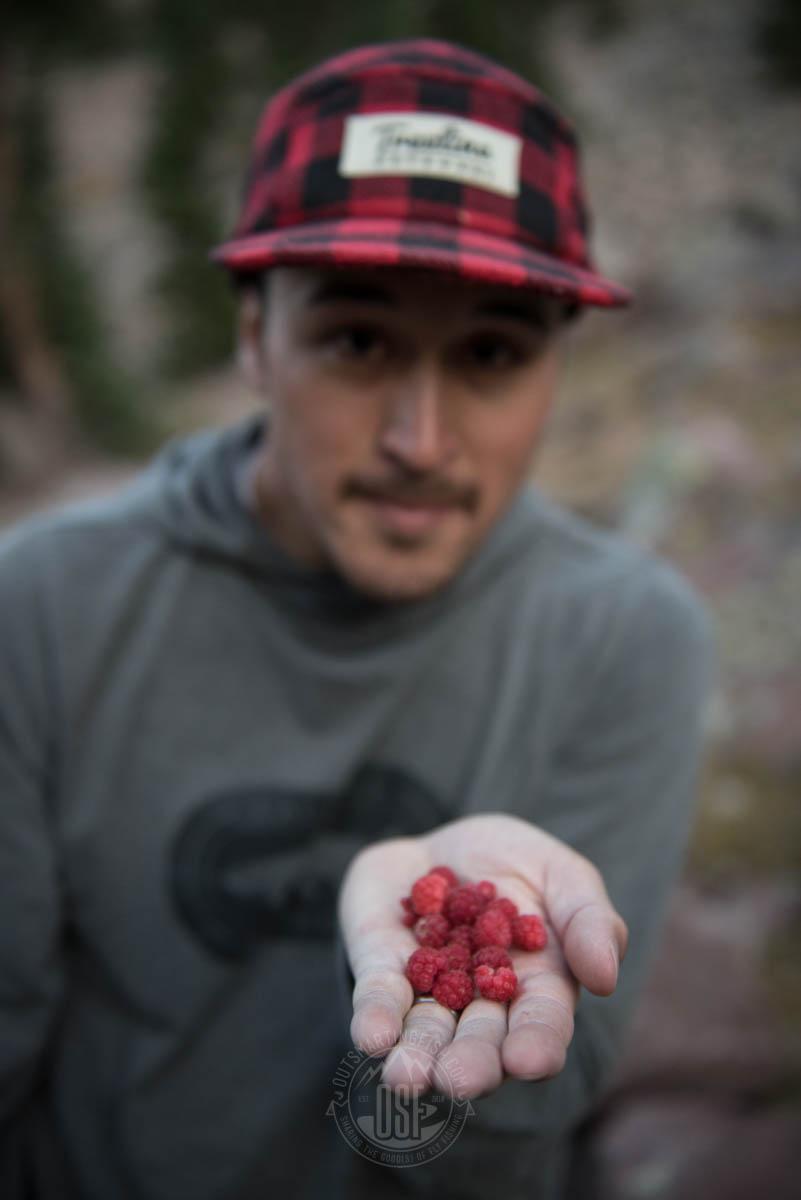 wild-raspberries-utah